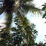 Pohon untuk Kehidupan